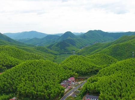 这就是电影《卧虎藏龙》拍摄地——中国大竹海景区.
