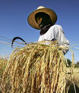 10月16日:中国第一颗; 《环形使者》隐藏的真相; 今天是世界粮食节图片