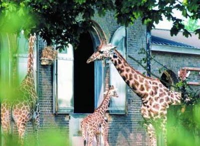 《哈利·波特与魔法石》中,在伦敦动物园的爬虫馆,哈利第一次发现